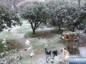 Snow on Crete 2019