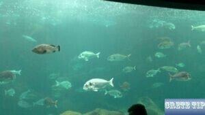 Crete Aquarium1