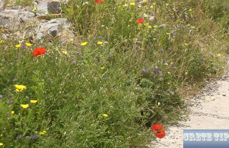 Numerous species of flowers