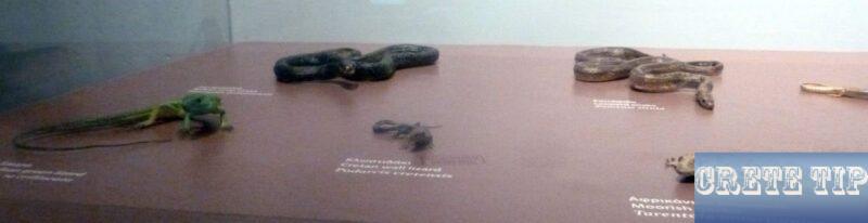 Cretan reptiles