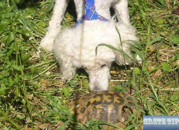 turtle on Crete